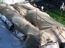 Форзиция линвуд голд посадка и уход в открытом грунте