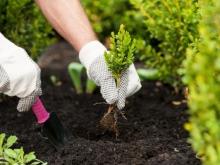 Флоксы из семян посадка и уход в открытом грунте