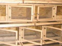 закрытые крольчатники