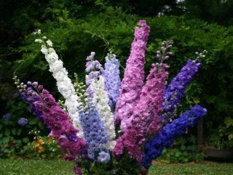Растения осенних цветников (100 фото): названия цветов и злаков, какие из них часто встречаются, как оформить клумбу хризантемами