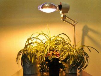 Светодиодный свет для растений
