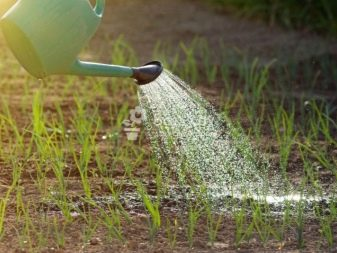 How To Choose a Watering Can Like a Pro 3