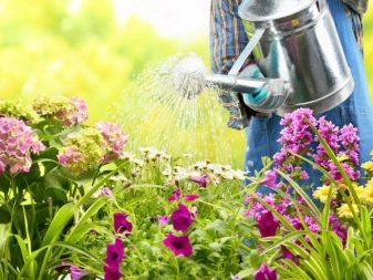 How To Choose a Watering Can Like a Pro 4