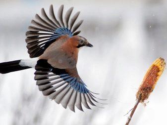 Чем наполнять кормушку для птиц