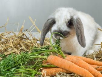 Можно ли декоративным кроликам грушу