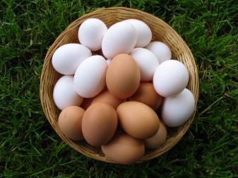 У каких птиц розовые яйца