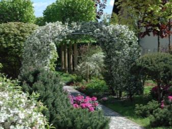 Многолетние вьющиеся цветы для сада (41 фото): названия плетущихся лиан для дачи. Морозостойкие и быстрорастущие ползучие виды цветов