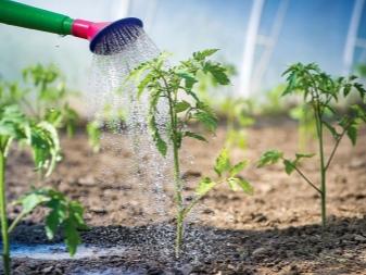 как часто поливать кусты