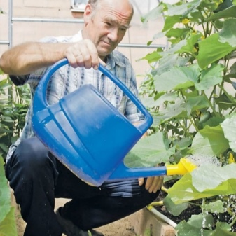 How To Choose a Watering Can Like a Pro 10