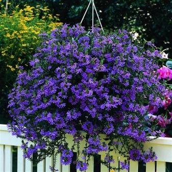 Какие цветы отлично приживутся в уличных горшках на даче
