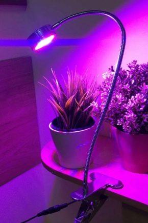 Светодиодные лампы для растений: разновидности и советы по выбору