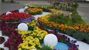 Особенности оформления цветников и клумб непрерывного цветения своими руками