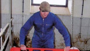 Проекты свинарника: какие бывают, как построить и обустроить внутри?
