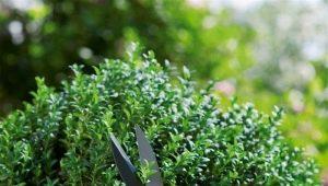 Садовые ножницы: разновидности и популярные модели