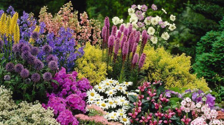 дизайн клумб и цветников перед домом фото с названиями цветов 6
