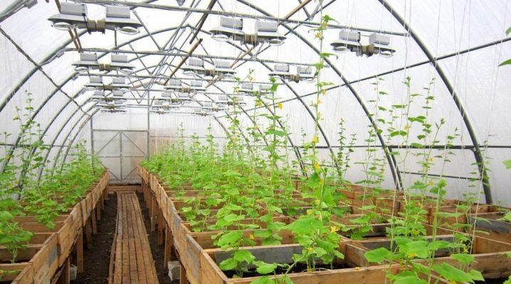 Выращивание в теплице персиков и нектаринов - Сад 6 соток 17