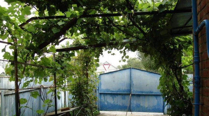 Как сделать навес для винограда?