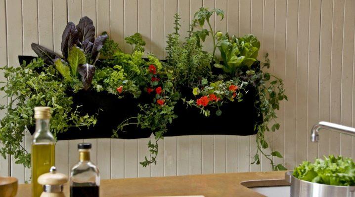Как выбрать цветы для кухни?