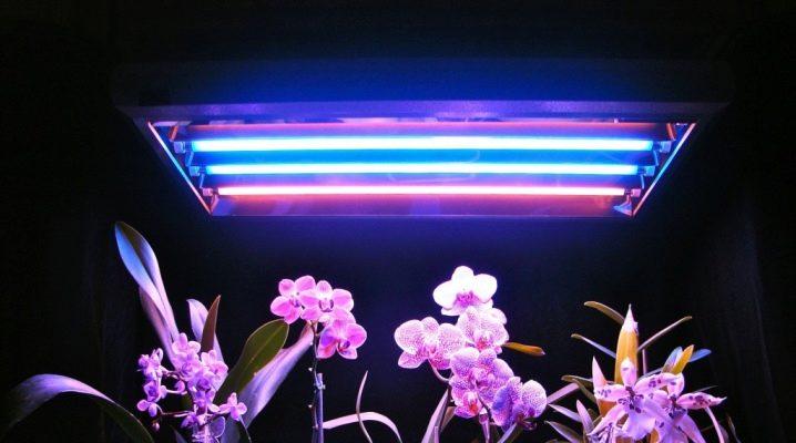 Виды люминесцентных ламп для растений и советы по их выбору