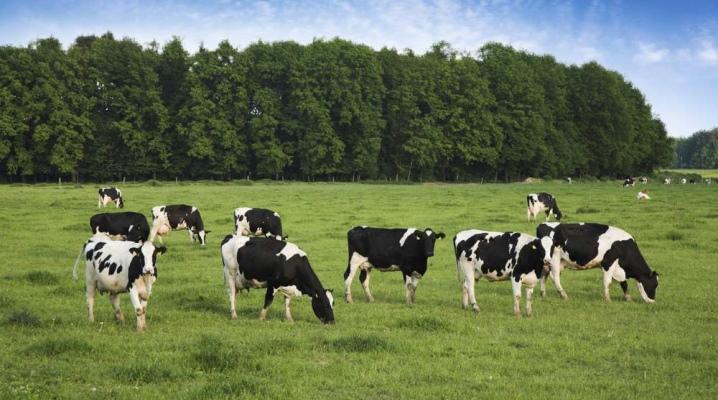 Земли для выпаса скота
