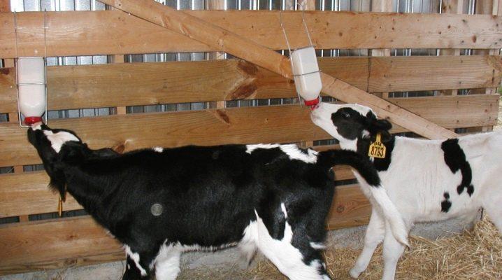 Заменитель сухого молока состав