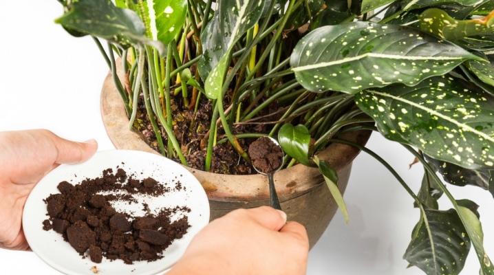 Куда можно использовать кофейную гущу после варки кофе: экологические способы