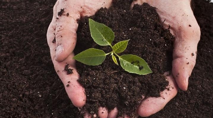 Удобрение для торфяной почвы