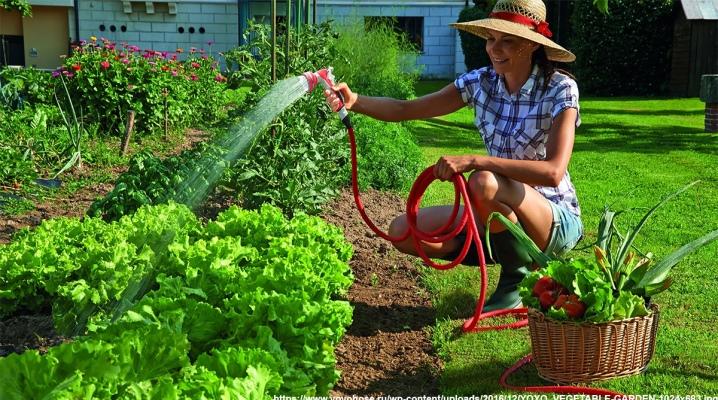 Сколько воды нужно каждому овощу