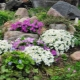Растения для альпийской горки: виды и их названия