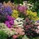 Подбираем растения для осенних цветников
