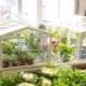 Парники на подоконнике и балконе: варианты домашних теплиц