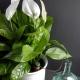Автополив для комнатных растений: что такое и как пользоваться?