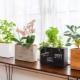 Деревянные горшки для цветов: особенности, дизайн и советы по выбору