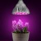 Ультрафиолетовые лампы для растений: особенности, виды и правила использования