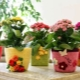 Вязаное кашпо для цветов: небанальные идеи для оформления горшка