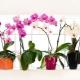 Выбираем кашпо для орхидей
