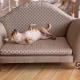 Диван для собаки: виды и правила выбора
