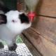Поилки для кроликов: разновидности, выбор и установка