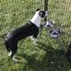 Советы по выбору кормушки в вольер для собак
