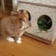 Кормушки для кроликов: особенности и виды