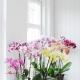 Виды и сорта орхидей