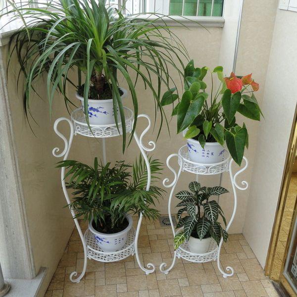 Домашние цветы на подставках