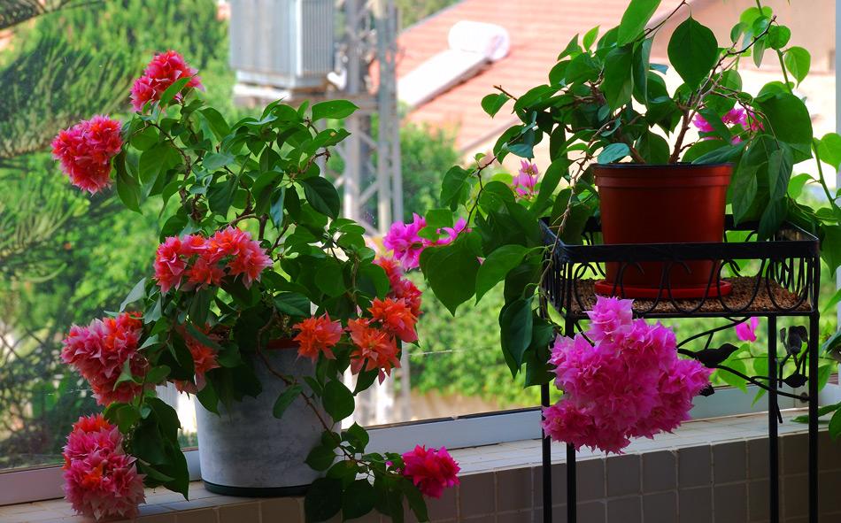 Цветы на балконе - красота неимоверная!!!. обсуждение на liv.