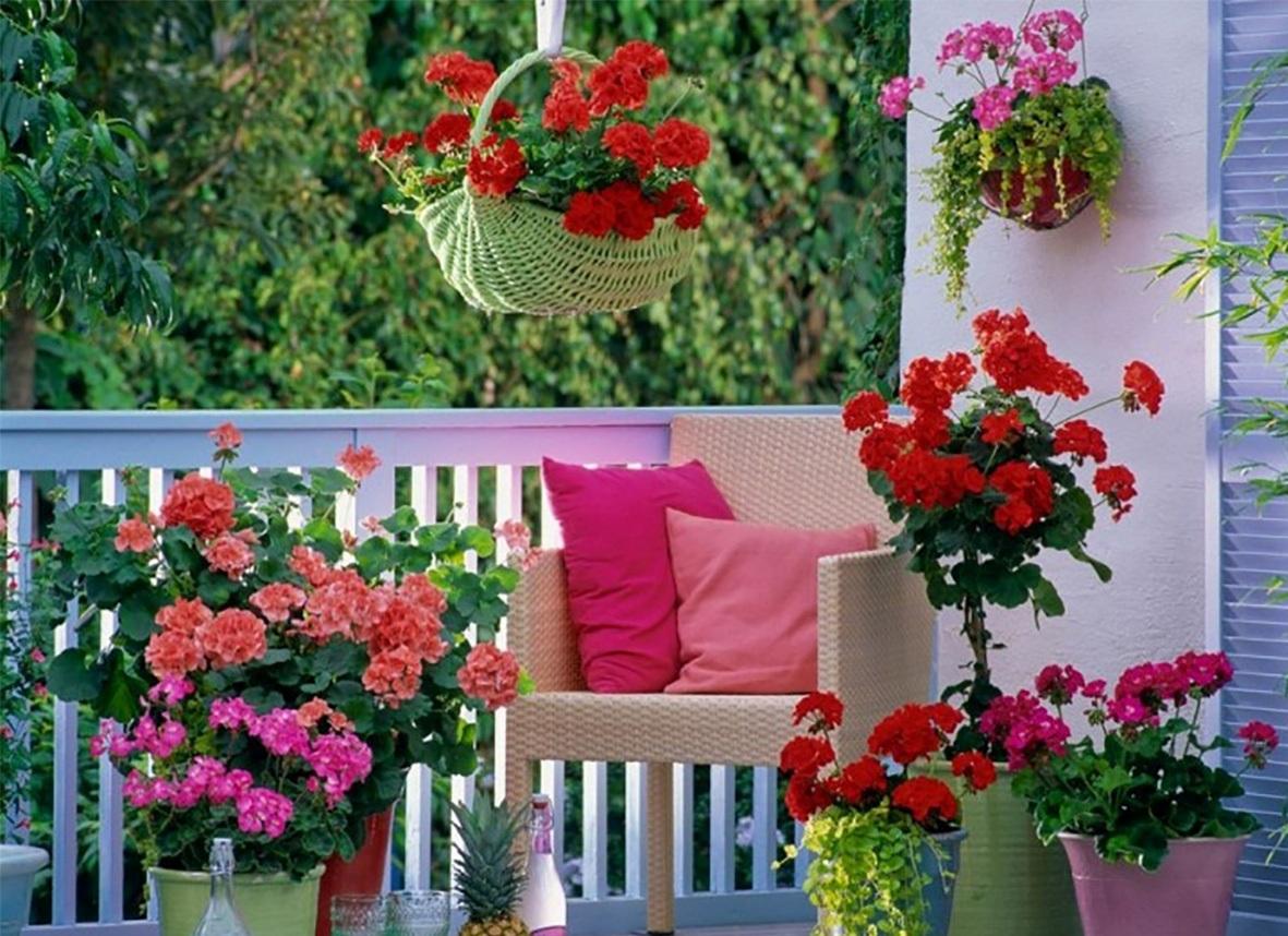 Какие цветы посадить на балконе, чтобы цвели все лето.