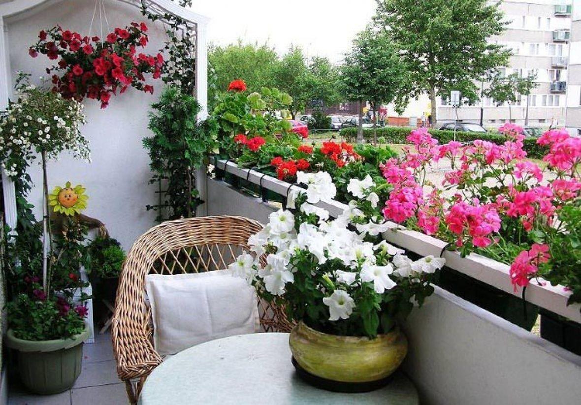 Выбираем балконные ящики для цветов.