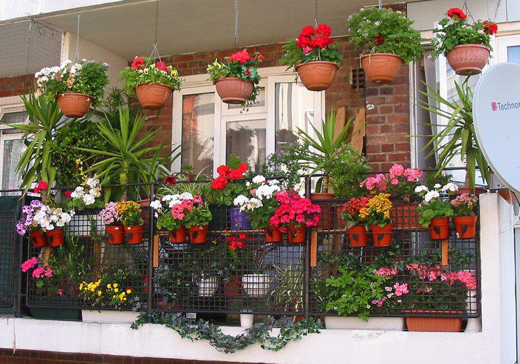Как разместить цветы на балконе