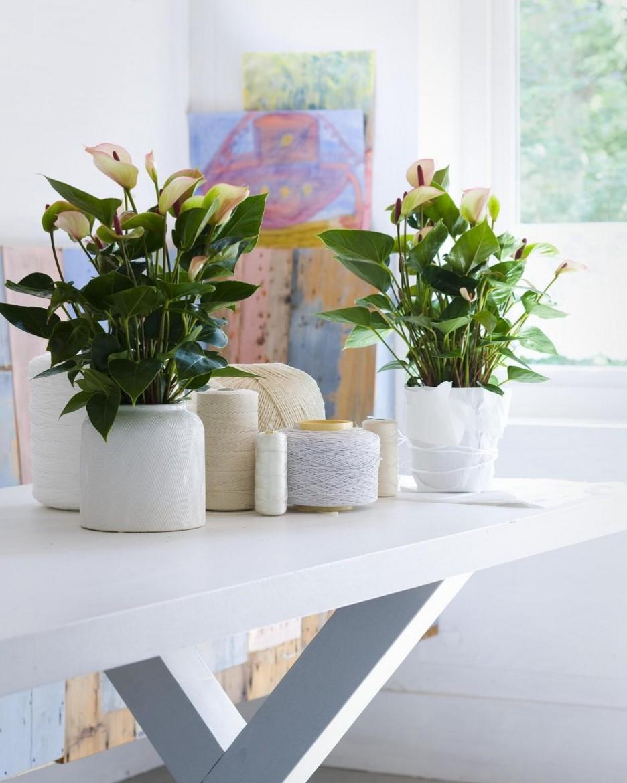 Несколько цветов в одном горшке фото