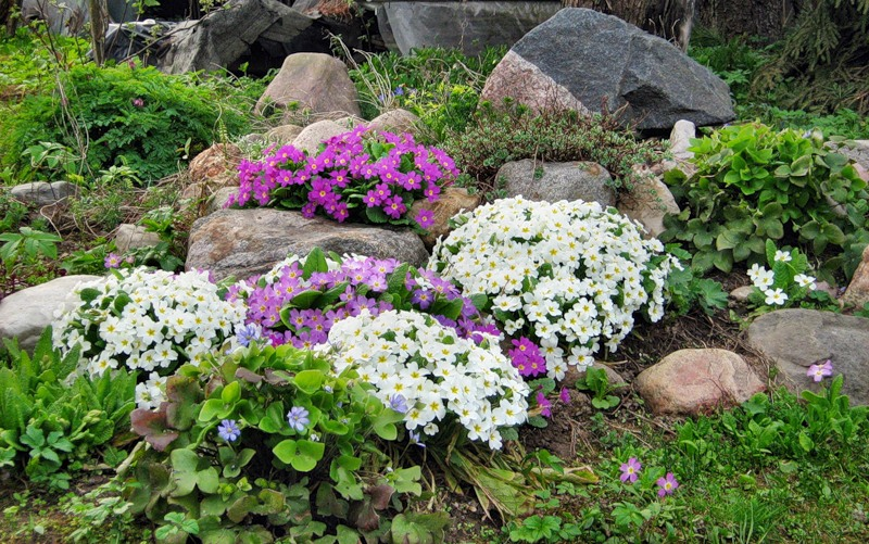 Фото садовых цветов с названиями для альпийской горки