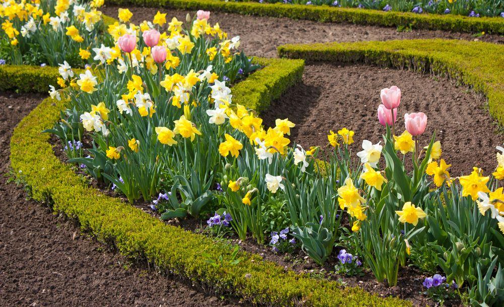 Растения осенних цветников 100 фото названия цветов и злаков какие из них часто встречаются как оформить клумбу хризантемами