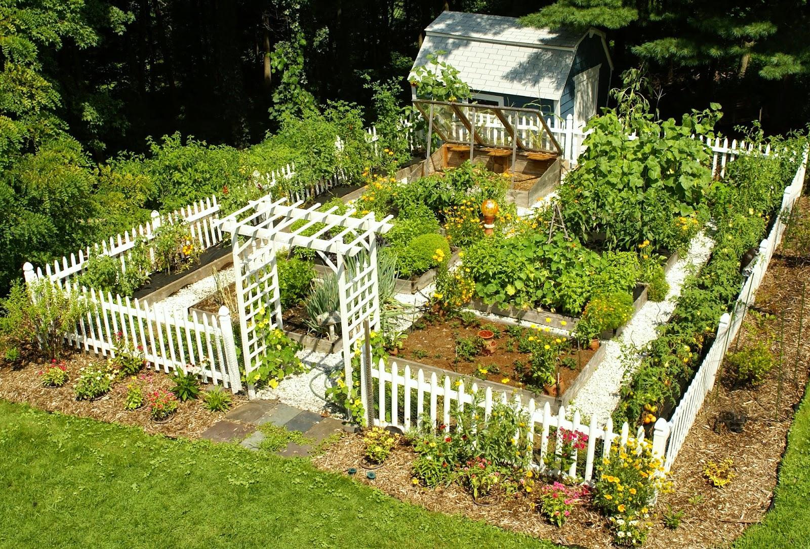 Фото садов и огородов дизайн